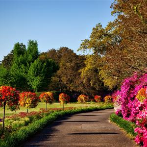 Jardin et bricolage